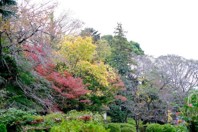 Autumn Autumn Colors Autumn Leaves Fall Fall Beauty Fall Colors Fujifilm Fujifilm X-E2 Fujifilm_xseries Japan Japanese Maple Maple Mapleleaf Park Red Xf35mm もみじ 公園 紅葉 紅葉狩り