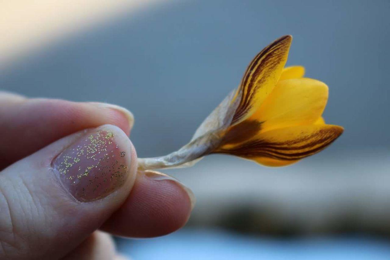 Close-up Human Hand Beginnings Day Outdoors Flower