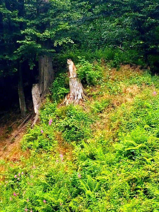 Nature Walk Outside Green Enjoying Life Saturday Hello World Balance Lux Animals