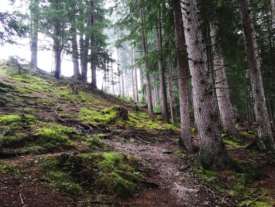 Travelling Tirol hiking mountain Wood coniferous forest
