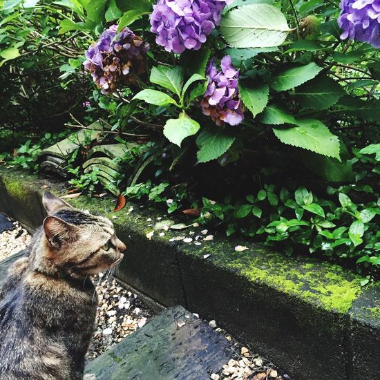 Mylove Orion Cat