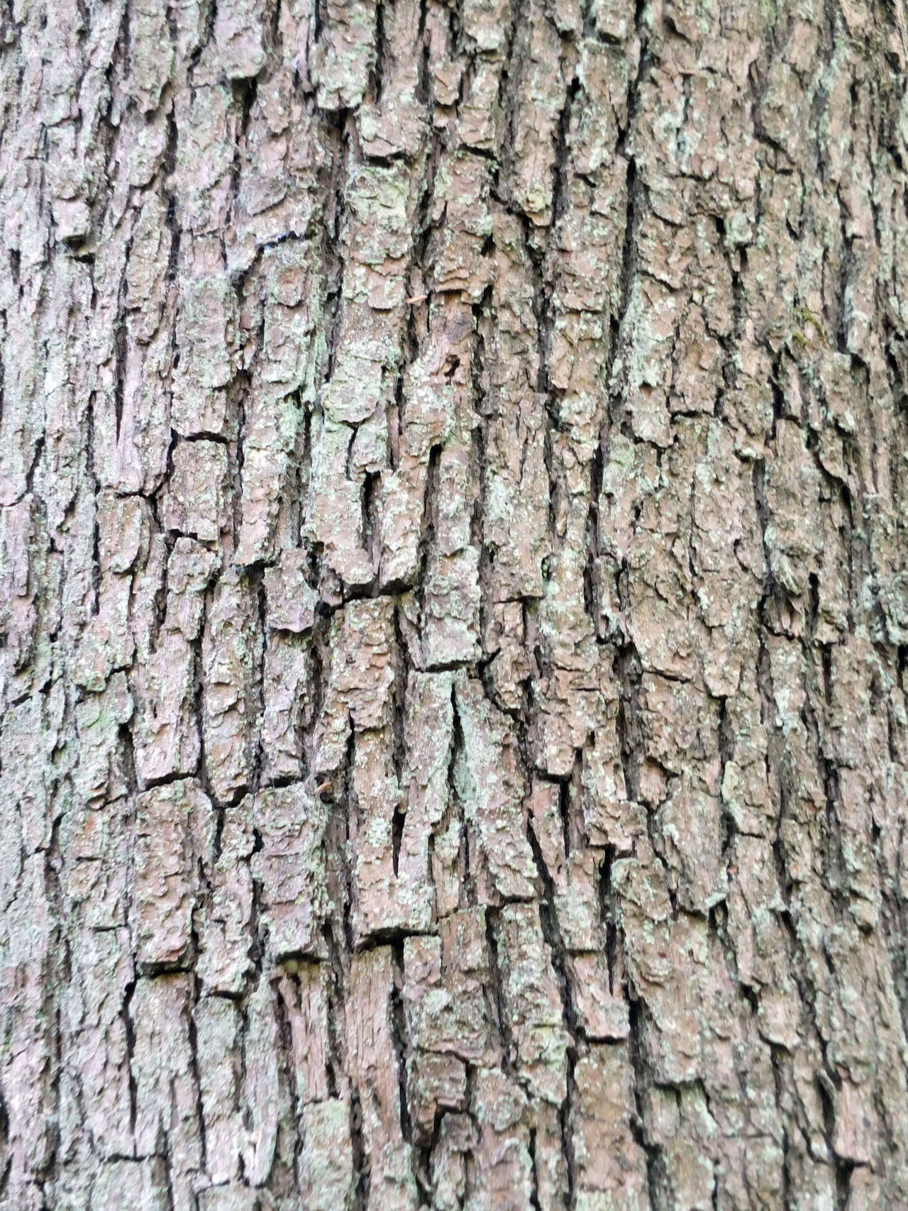 rough tree bark Backgrounds Built Structure Close-up Day Full Frame Nature No People Outdoors Pattern Rough Textured  Tree Tree Trunk Wood - Material