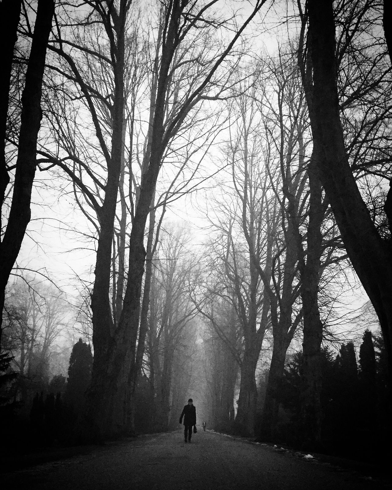 Tree Silhouette Fog Bw_collection Black And White Street Photography Monochrome Vanishing Point