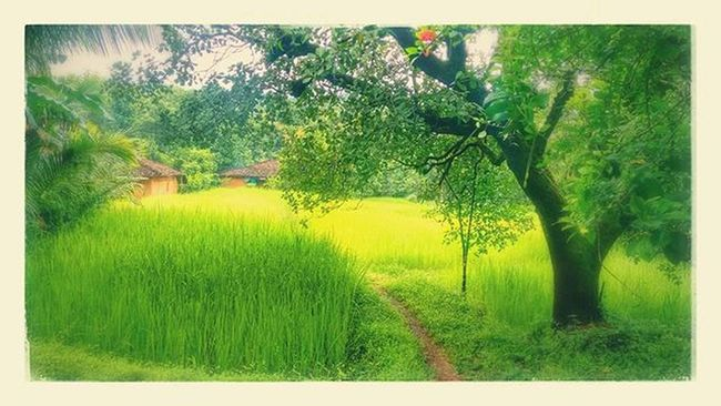 Moto_g2_click Greenery At_village Nature Tagsforlikes Tagsforfollow Ig_addicts Picoftheday Photooftheday L4like F4F Follweyou Folllow4follow