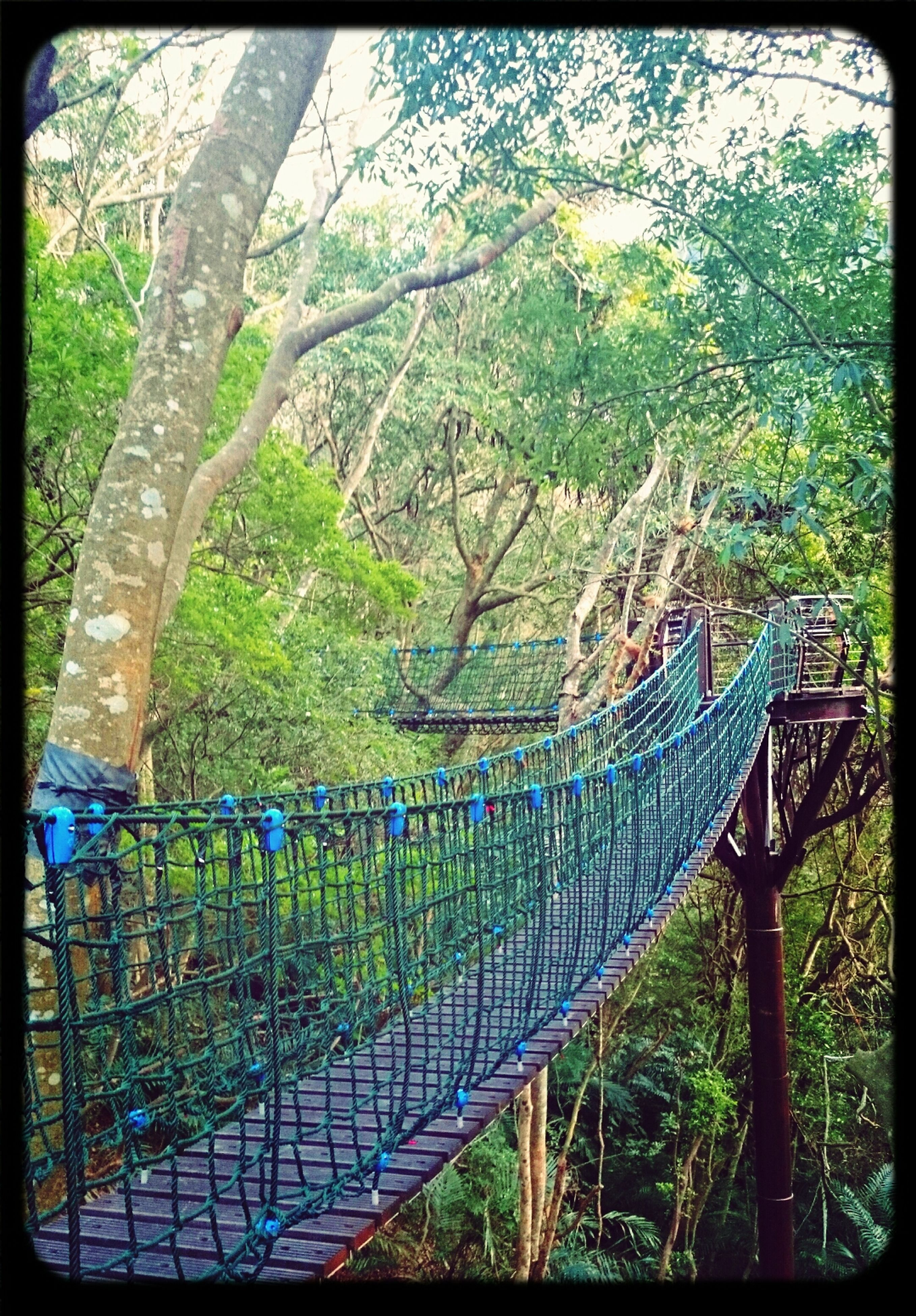 transfer print, tree, railing, auto post production filter, bridge - man made structure, footbridge, connection, built structure, fence, nature, growth, green color, bridge, day, river, architecture, water, tranquility, branch, outdoors