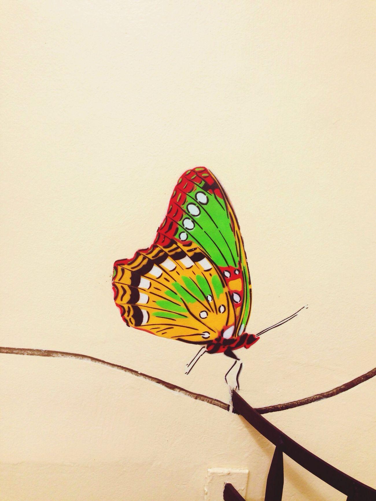 Papillion ??