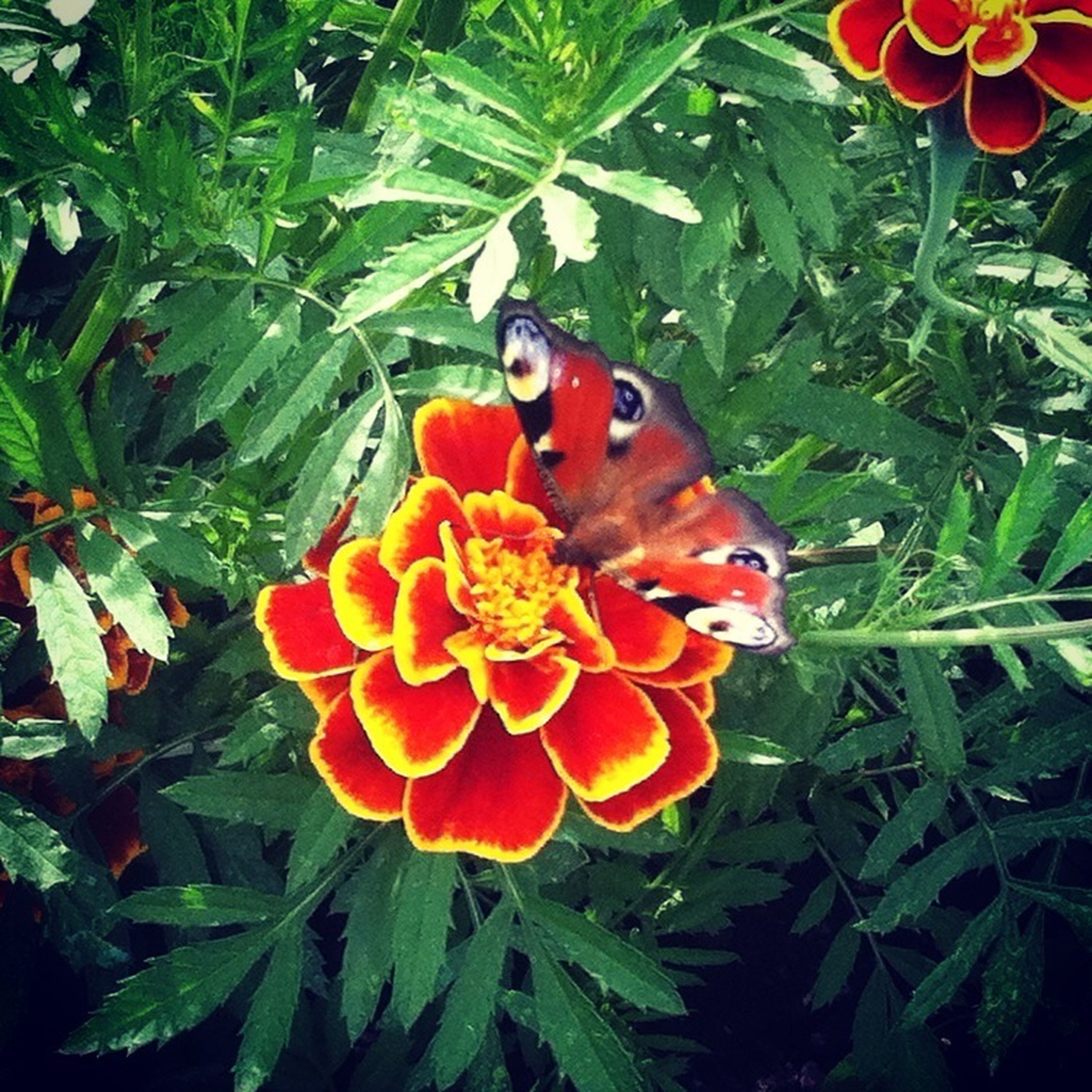 flower, freshness, petal, fragility, growth, flower head, plant, beauty in nature, red, insect, blooming, one animal, leaf, nature, orange color, animal themes, close-up, animals in the wild, high angle view, green color