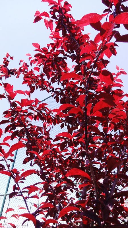 Red Sheets Nature Beautiful Good Day 😊😊