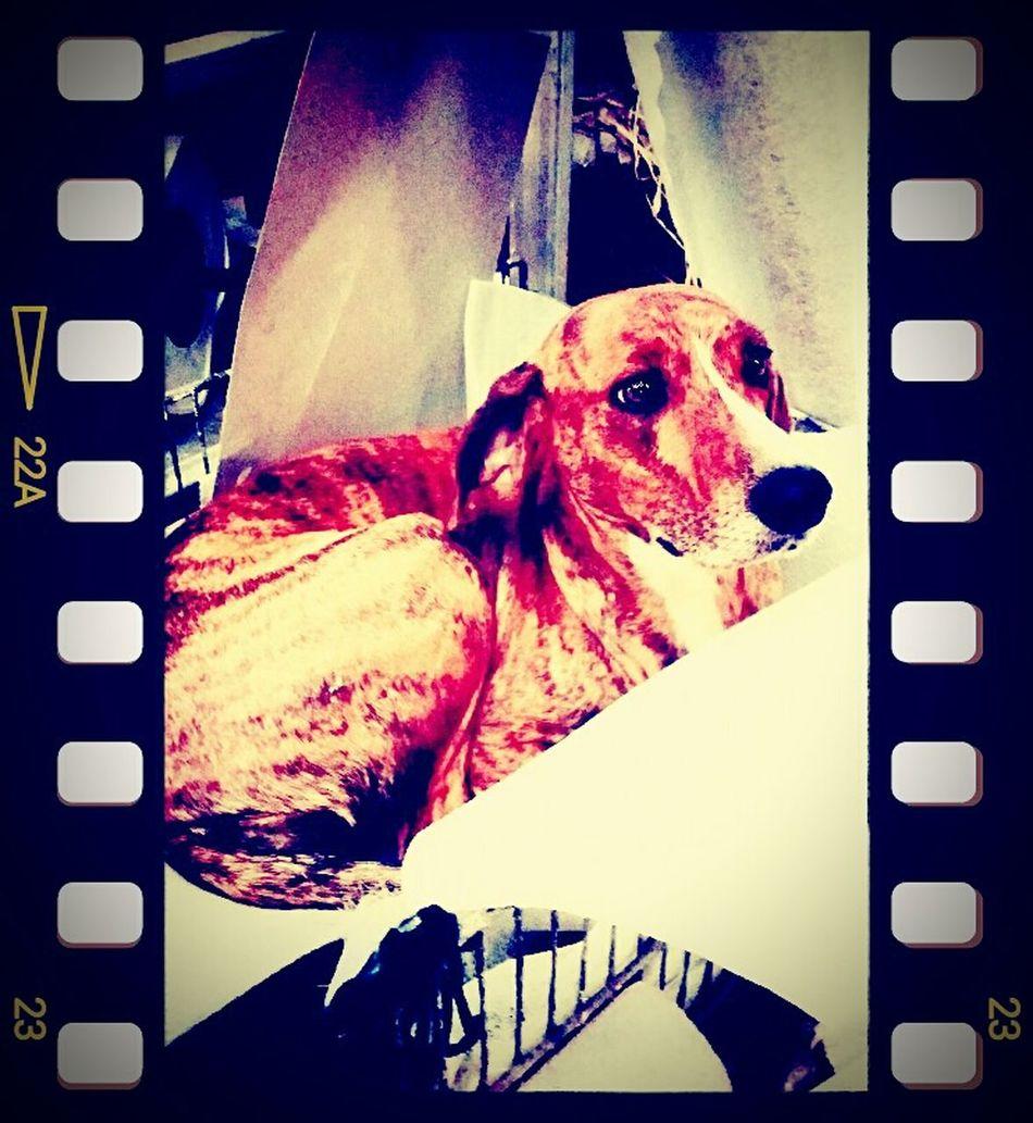 Guiltydog Lovelovelove Mysweetie