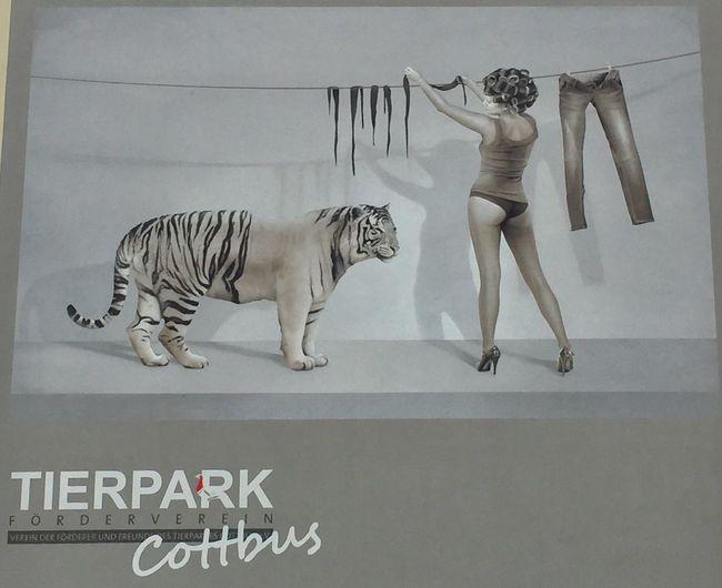 Werbung an einer großen Hauswand ... Tiger Wäsche Tierpark Zoo advertising