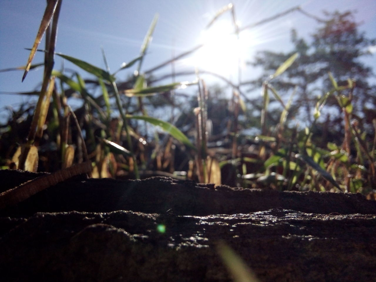 sunlight, nature, no people, outdoors, day, field, plant, growth, close-up, beauty in nature, sky