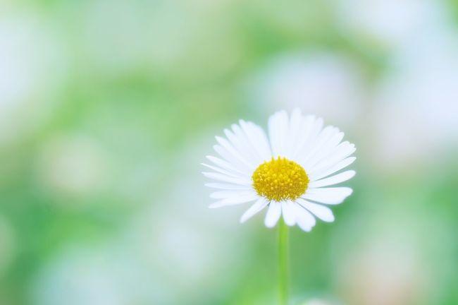 Flower Macro Fun カメラ女子風 Bokeh
