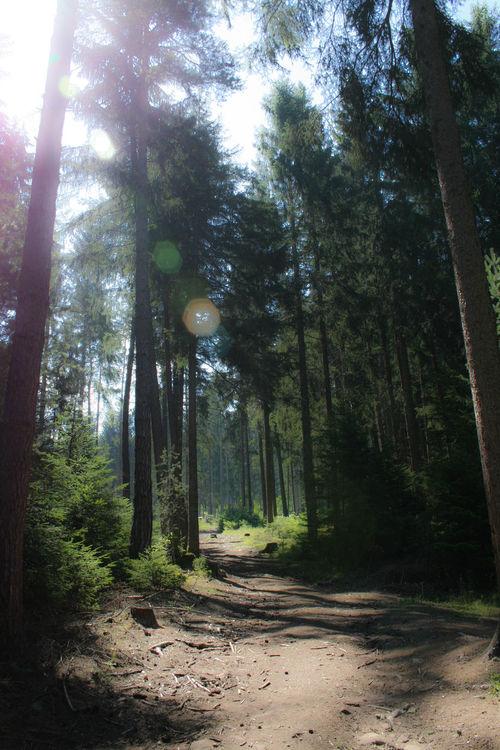 Bosco Alberi Ombre Luci Luci E Ombre Luci Ed Ombre Luci&ombre Trees