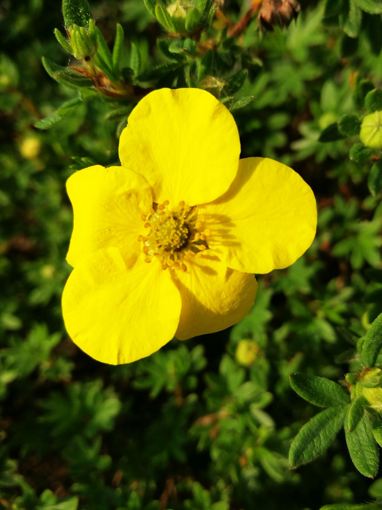 Flowers Flower Nature Nature Photography Yellow Flower Spring Summer Photography Taking Photos Nature's Diversities