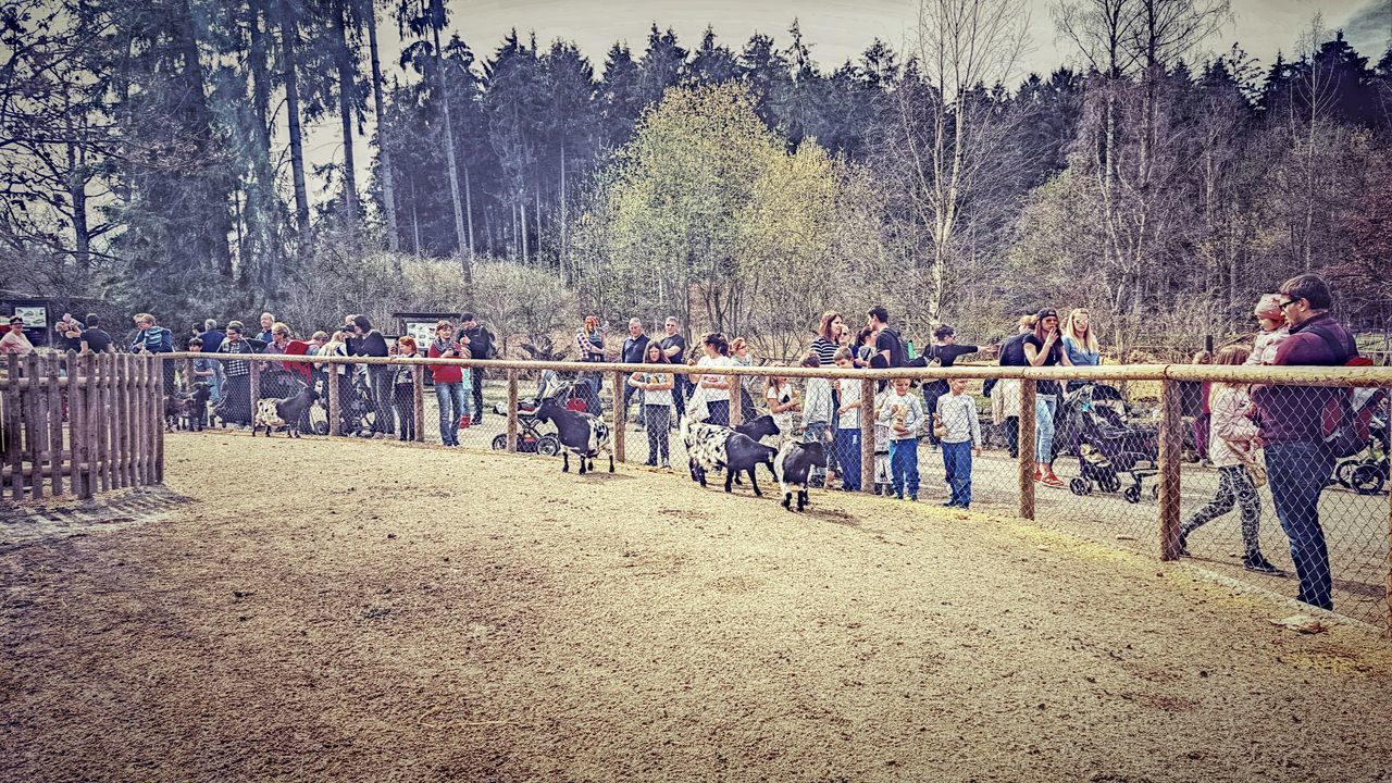 large group of people, tree, real people, men, outdoors, leisure activity, day, competition, nature, competitive sport, women, sport, lifestyles, togetherness, horse racing, sports race, people, sportsman, adult, sky, adults only