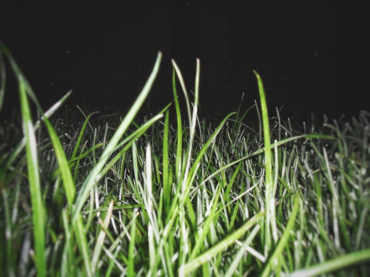 growth, plant, grass, nature, close-up, no people, outdoors, beauty in nature, freshness, day