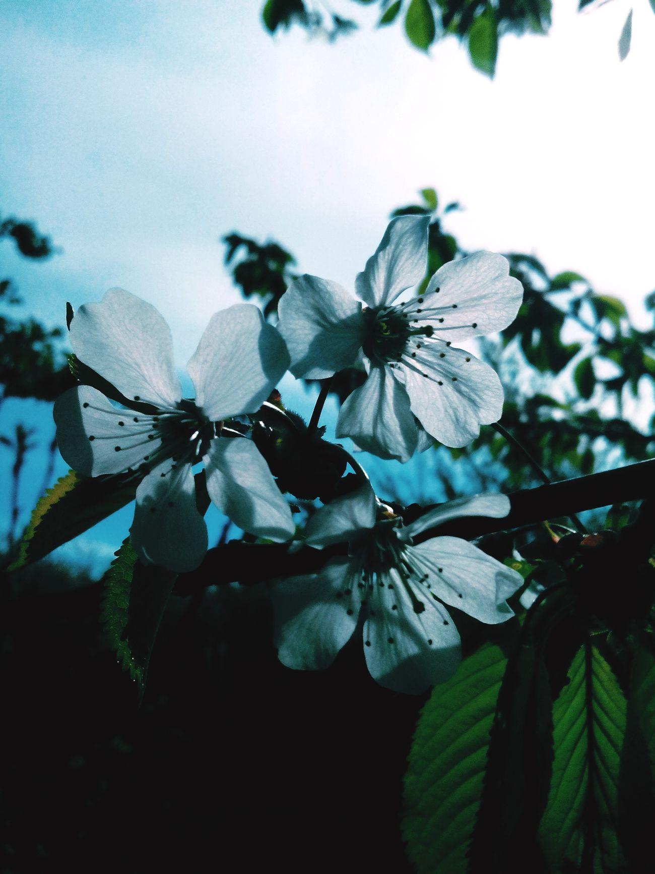 Hello World Flowers,Plants & Garden Flowerporn Spring Flowers Flowerpower EyeEm Flower Flowers :) Springtime Kwiaty Flowers
