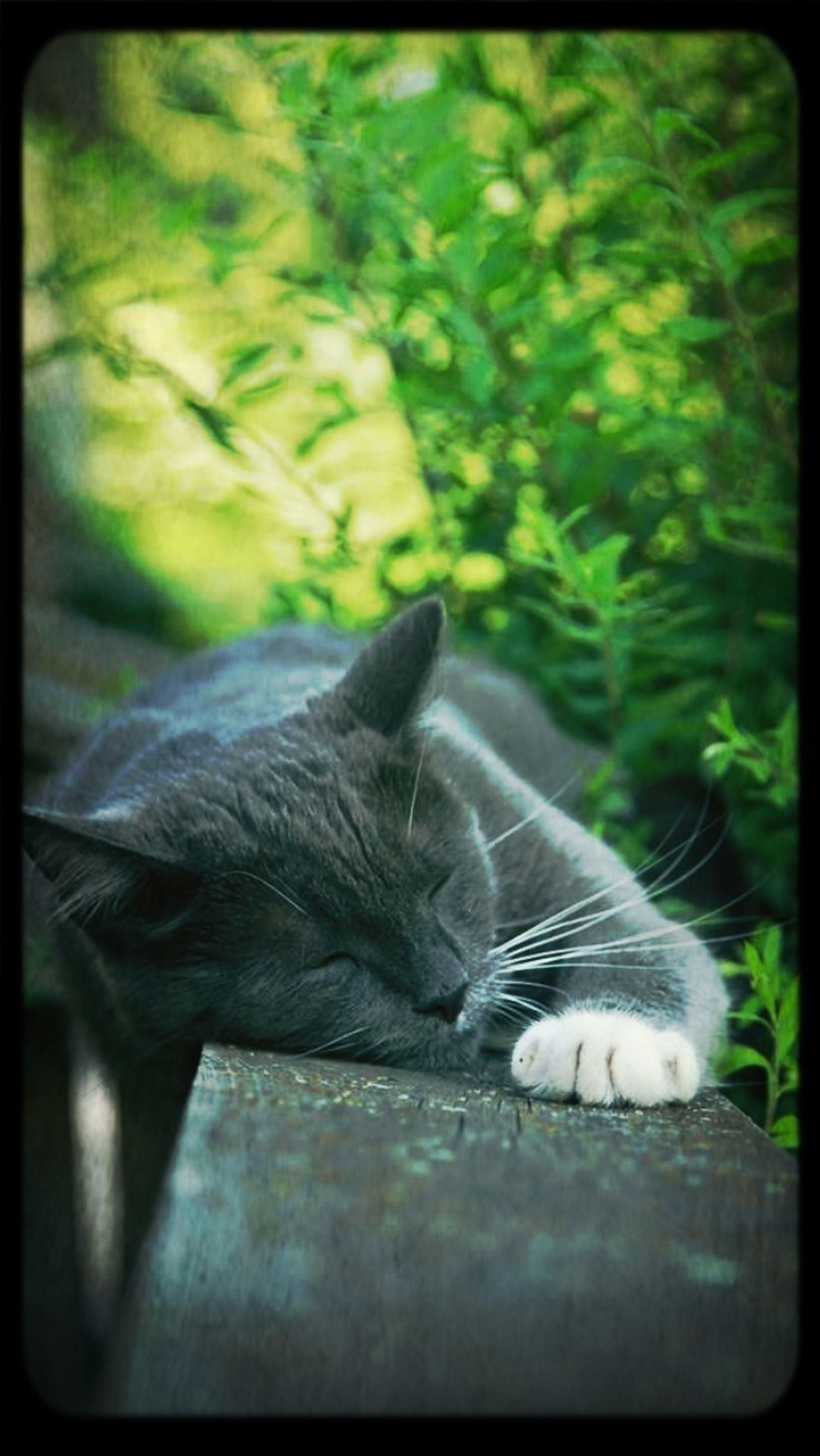 My Next Door Cat Animals Love Cute Pets