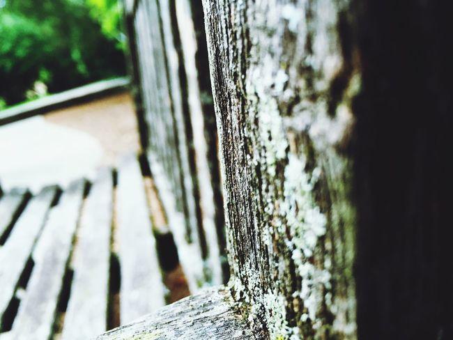 Bench Park Beautiful ArtWork Old Architecture Wood Memory Relaxing Taking Photos Enjoying Life
