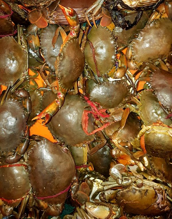 Naughty live country crabs whose claws were tightly tied! Fish Market Crabs For Sale Country Crab Green Crab Crabs Crabs!! Crab Time Selling Crab Group Shell Crab Shell Creature Arthropods Claws Claws Out Clawsup Arthropod Collection Decapod Crustacean Eyeem Collection