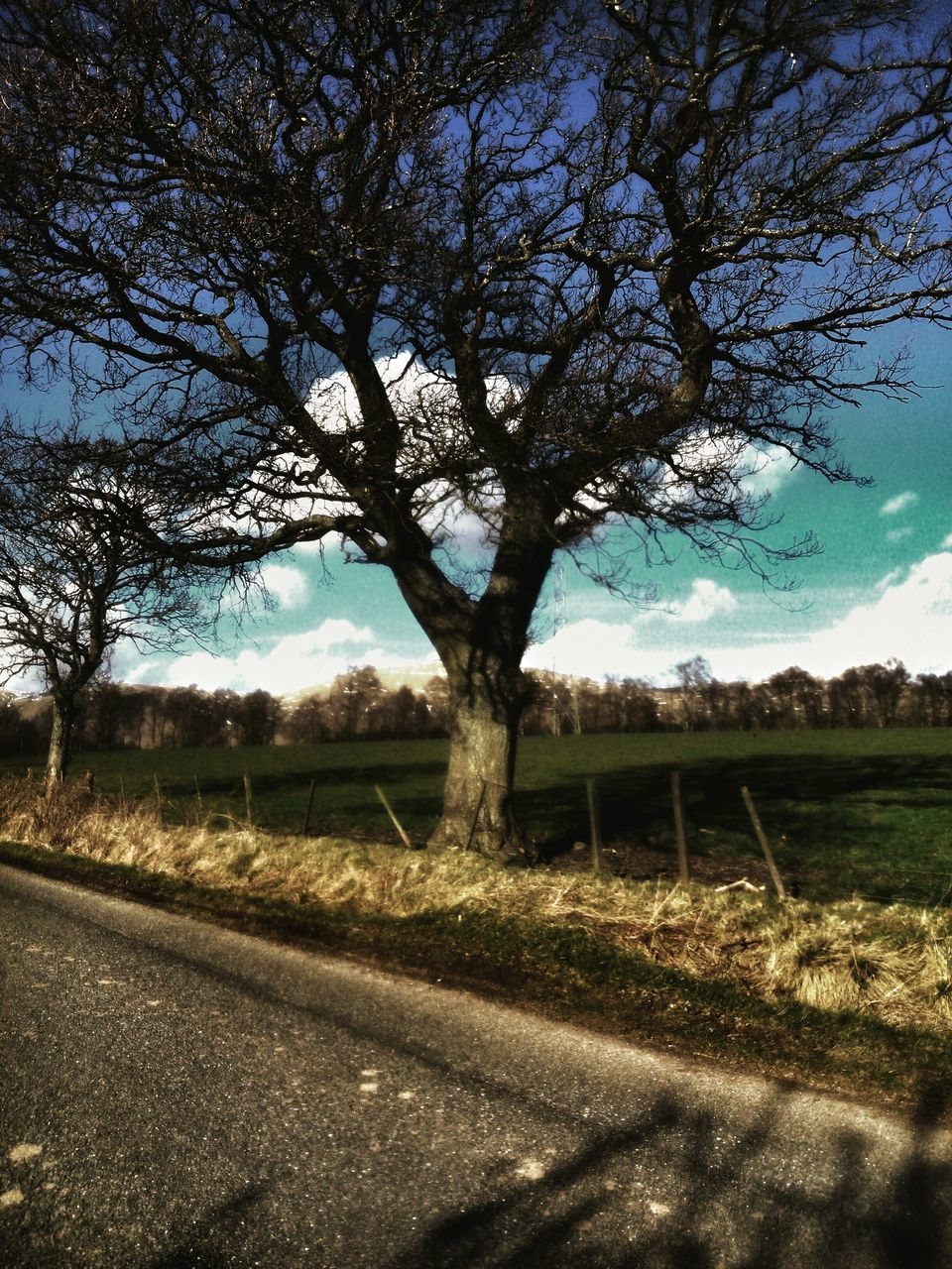 tree, landscape, nature, tranquility, no people, sky, bare tree, field, day, road, branch, scenics, outdoors, grass, beauty in nature