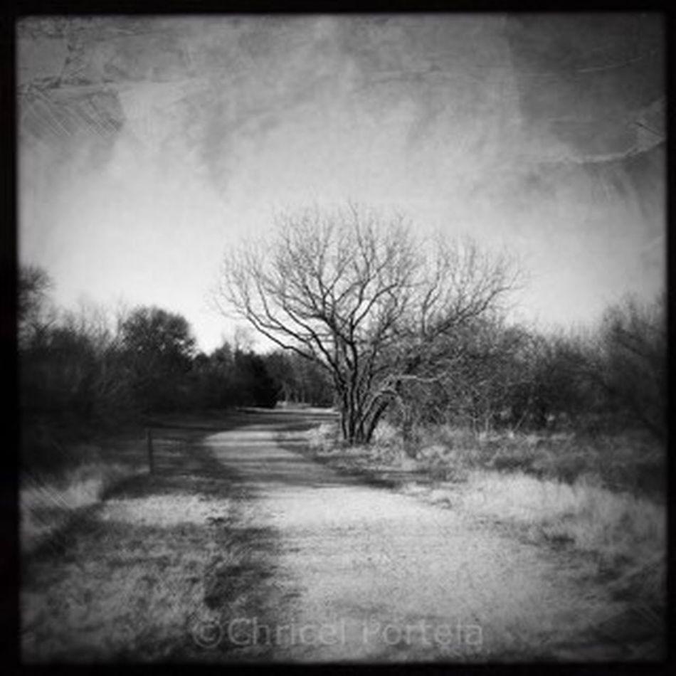 Tree Bare Tree Tranquility Outdoors Noir Et Blanc Blackandwhite Solitary Solitude