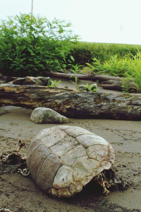 Turtle Nature On The Docks