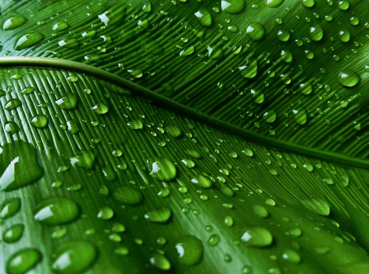 Beautiful stock photos of background, Backgrounds, Beauty In Nature, Close-Up, Day