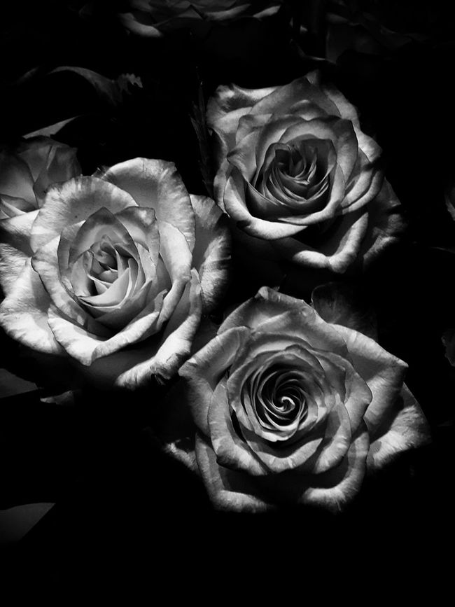 Close-up Flower Nature Beauty In Nature Fragility No People Indoors  Flower Head Beauty In Nature Rose - Flower Nature Majestic Monochrome Monochromatic Monochrome Photography Black And White Beauty Freshness Backgrounds Decoration Black Background This Week On Eye Em