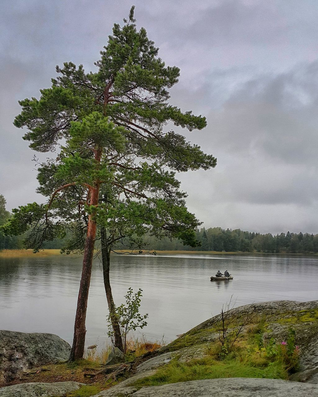 tree, water, lake, nature, tranquility, tranquil scene, beauty in nature, growth, scenics, sky, no people, cloud - sky, outdoors, day, landscape