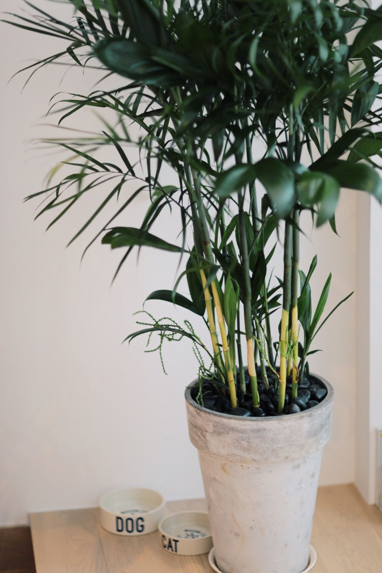 Potted Plant Plant Indoors  Growth Vase Table Home Interior No People Flower Nature Day Close-up Architecture Freshness