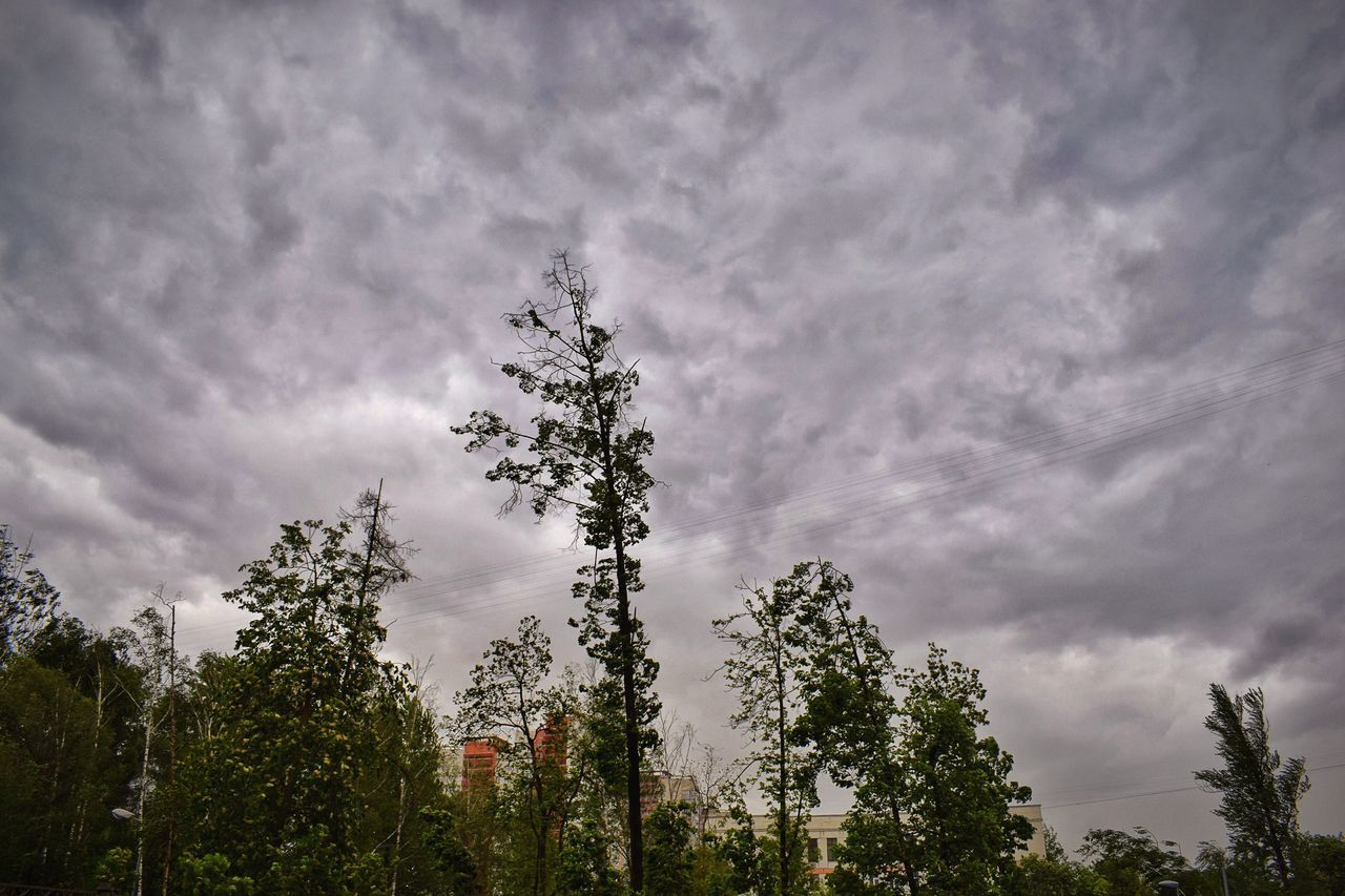 I hope that your weather is much better than ours and I wish you all a beautiful evening 🙋🏻✨ Tree Sky Cloud - Sky Growth Low Angle View No People Day Outdoors Nature Beauty In Nature Storm Cloud Tree Nature Stormy Weather Storm Clouds Storm How's The Weather Today?