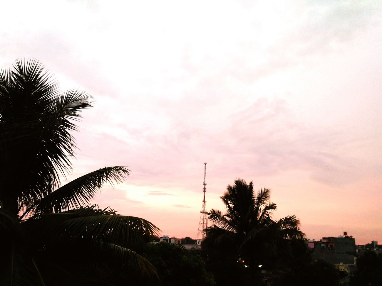 At evening, Cloud - Sky Tree No People Beauty In Nature Sky Towers And Sky Sunset Times Backgrounds Outdoors