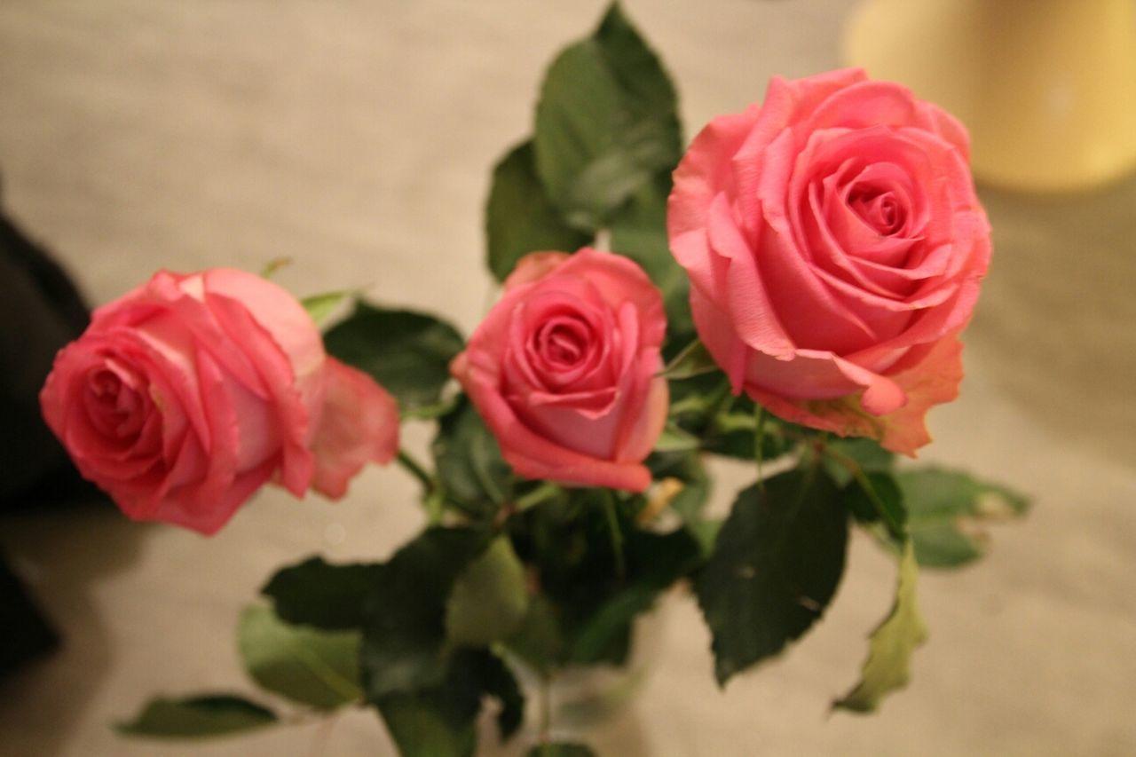 Flowers Flowerporn Roses Pink Roses