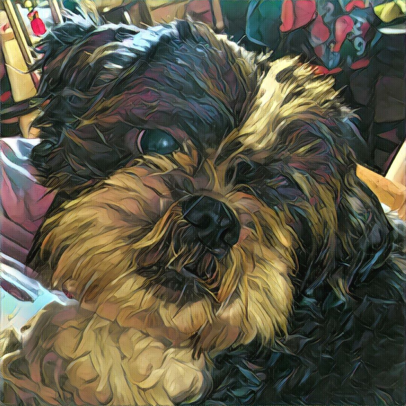 Pets Dog Shihtzu Art