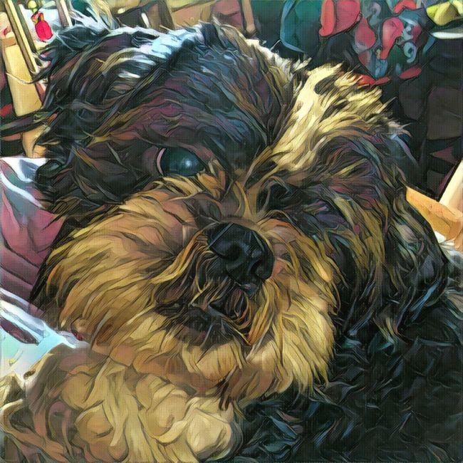 Pets Dog Shihtzu Art