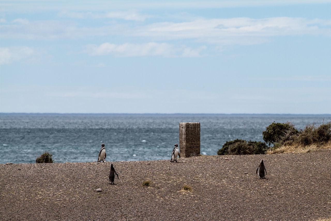Penguins On Beach Against Sky