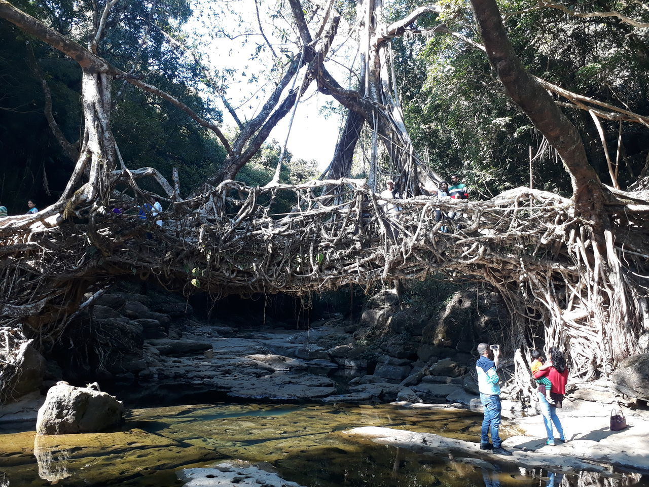 Living Root Bridge in Shillong Beauty In Nature Branch Cold Temperature Day Growth Hiking Men Nature Outdoors People Real People Scenics Snow Tree Tree Trunk Winter