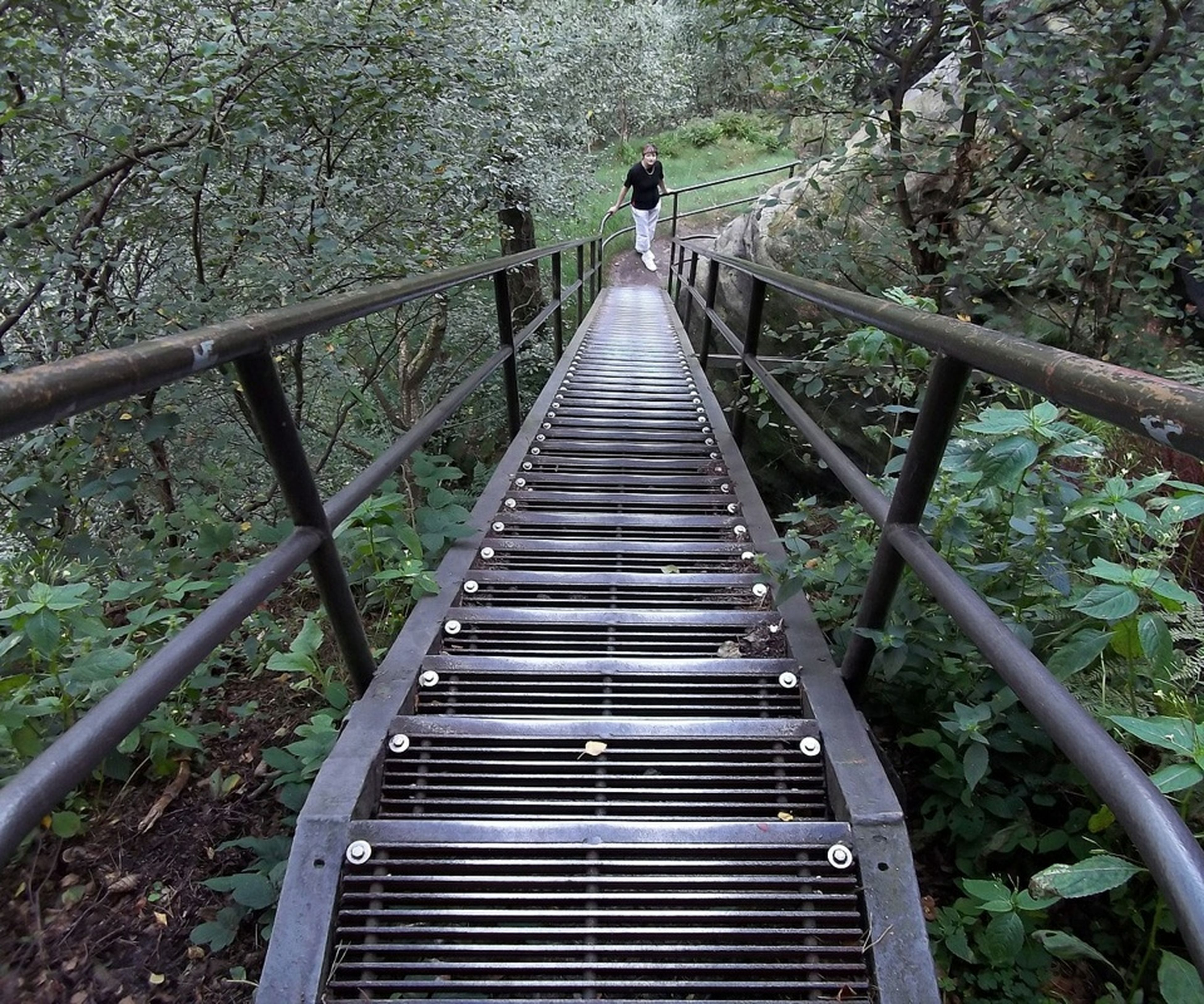 railing, tree, the way forward, footbridge, steps, diminishing perspective, connection, staircase, steps and staircases, growth, forest, tranquility, branch, nature, bridge - man made structure, wood - material, boardwalk, built structure, plant, day