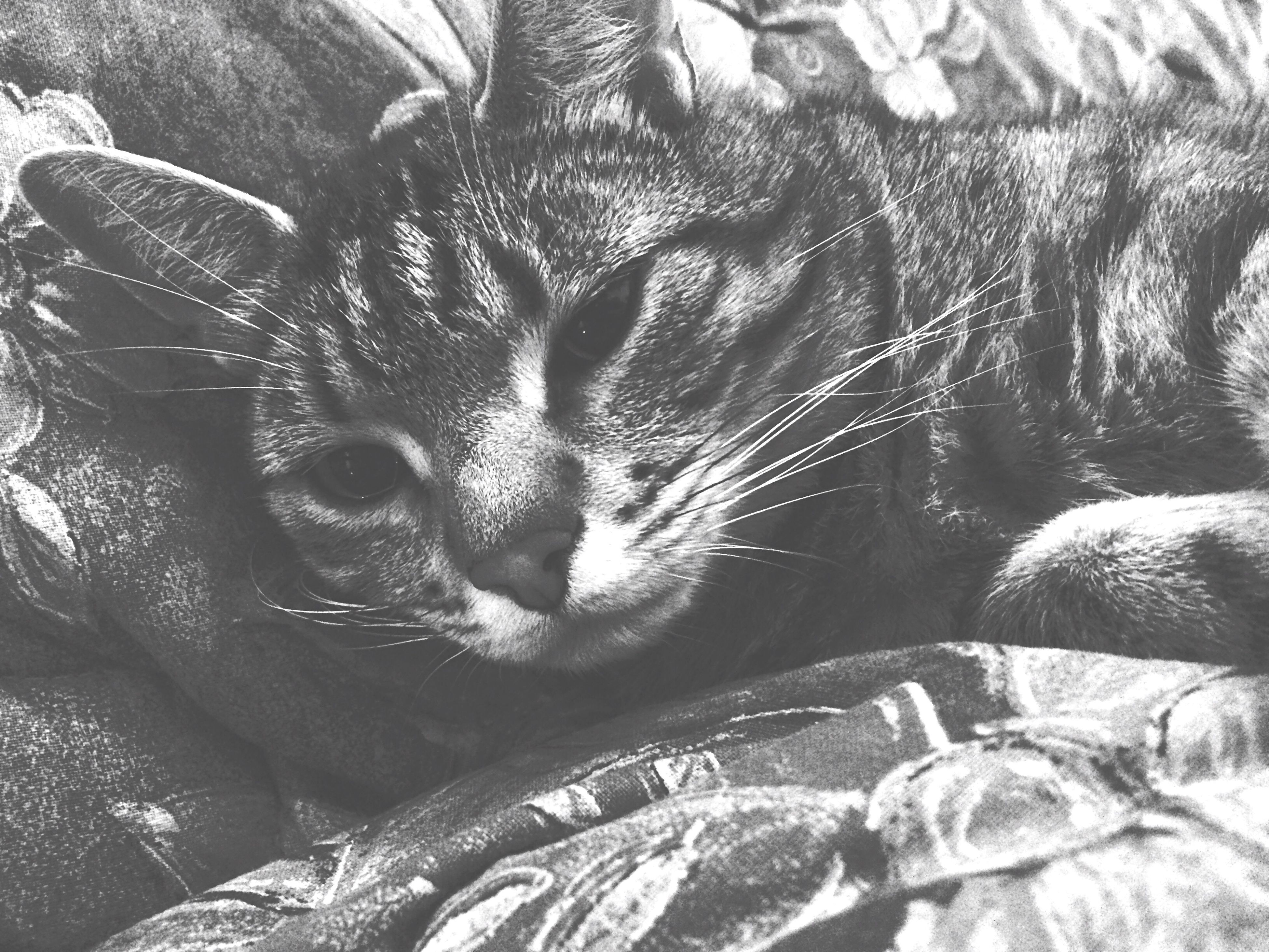 animal themes, one animal, high angle view, indoors, domestic cat, close-up, cat, pattern, no people, pets, mammal, domestic animals, whisker, day, feline, full frame, art, part of, art and craft