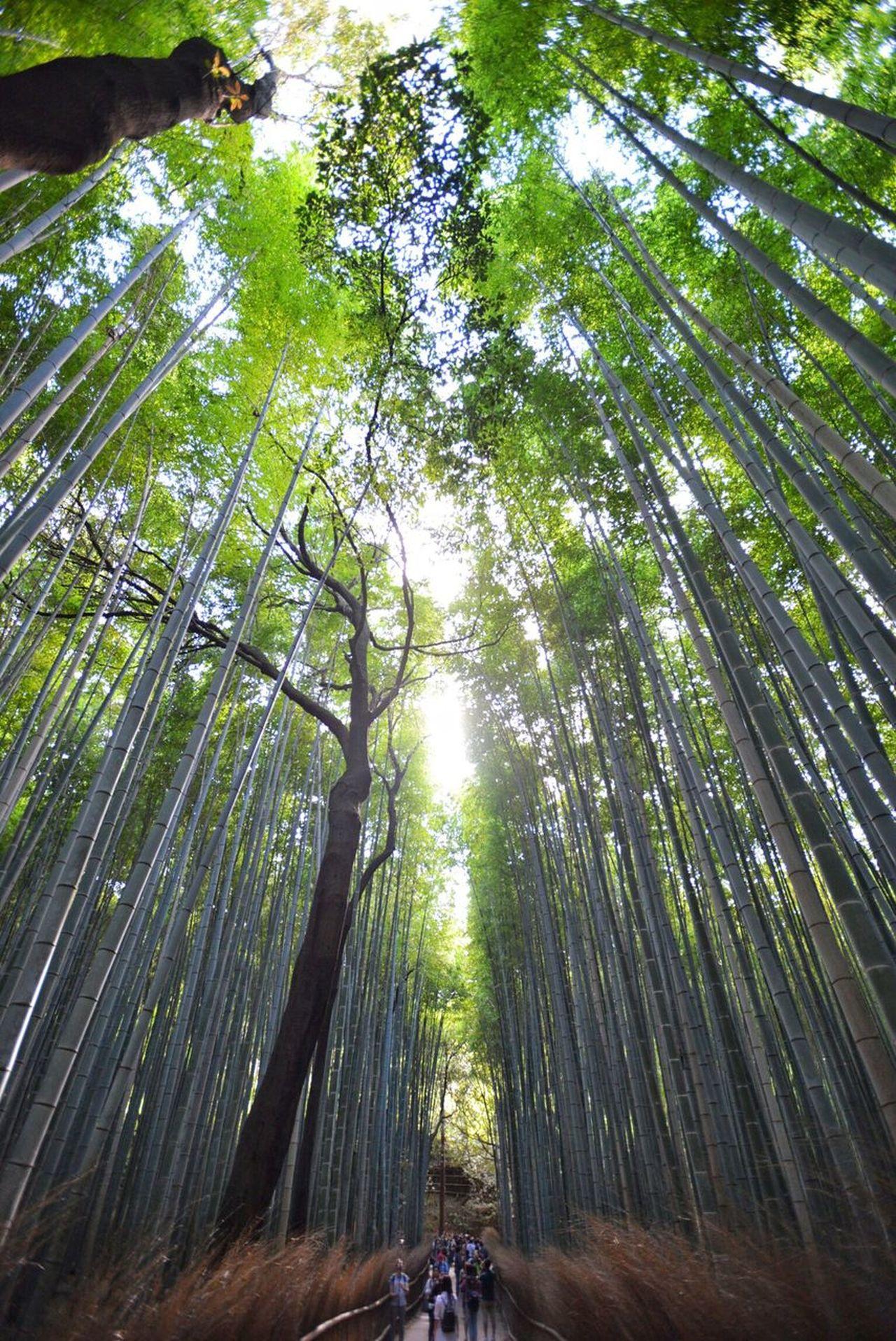 Beauty In Nature Tree Photos Photo Kyoto,japan Eyeem Photography Eyeemphotography Kyoto, Japan D600 Nikon D600 Nikon Happy Hour Kyoto Kyouto Tree