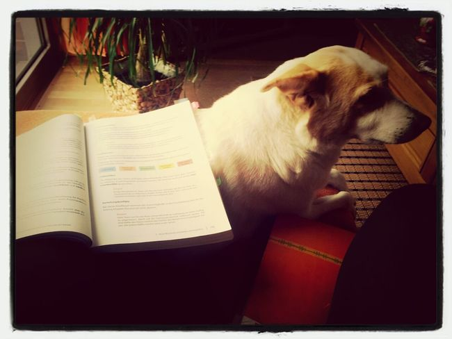 Letztes Lernen und Hund lernt mit