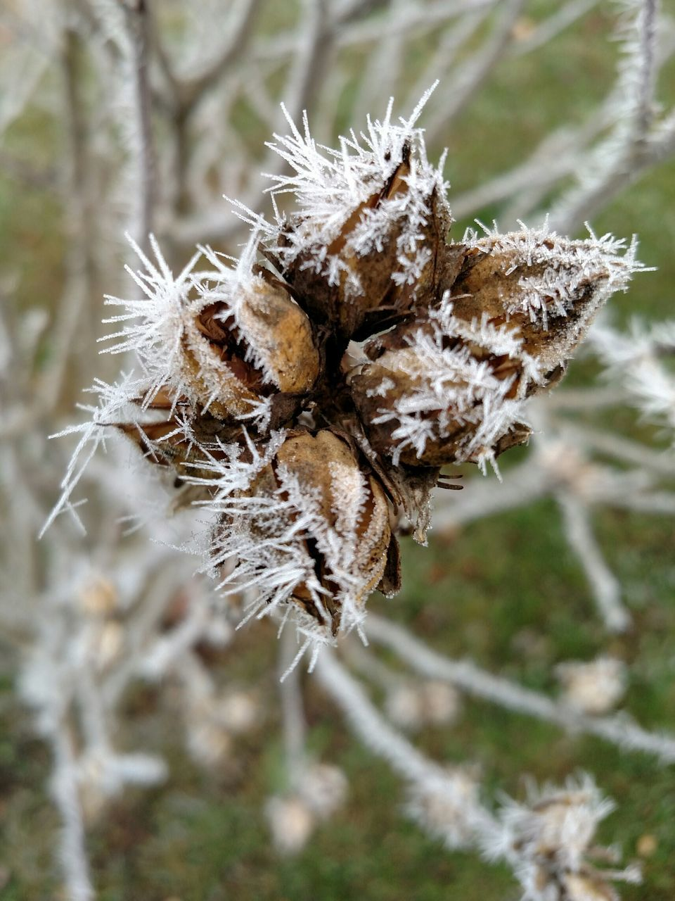 High Angle View Of Frosted Plant Pods