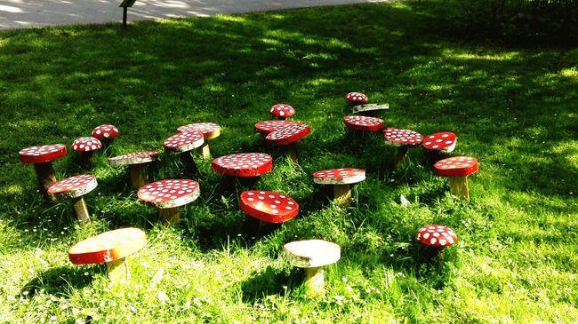 Pilze Fliegenpilz Holz Kunst Mushrooms Pflanzenwelt Park Thinks I Like ArtWork White Point Rotweiss Punkte Pünktchen