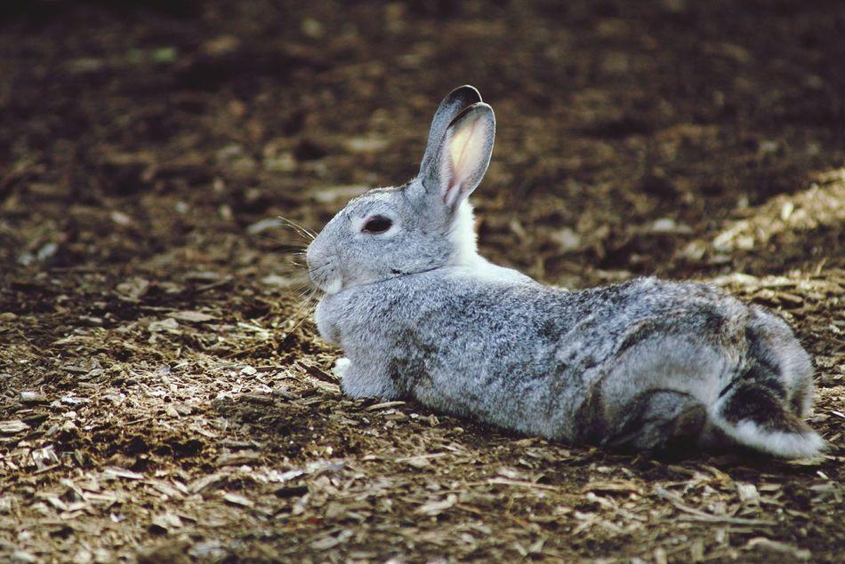 Beautiful stock photos of rabbit, Alertness, Animal, Animal Hair, Animal Themes