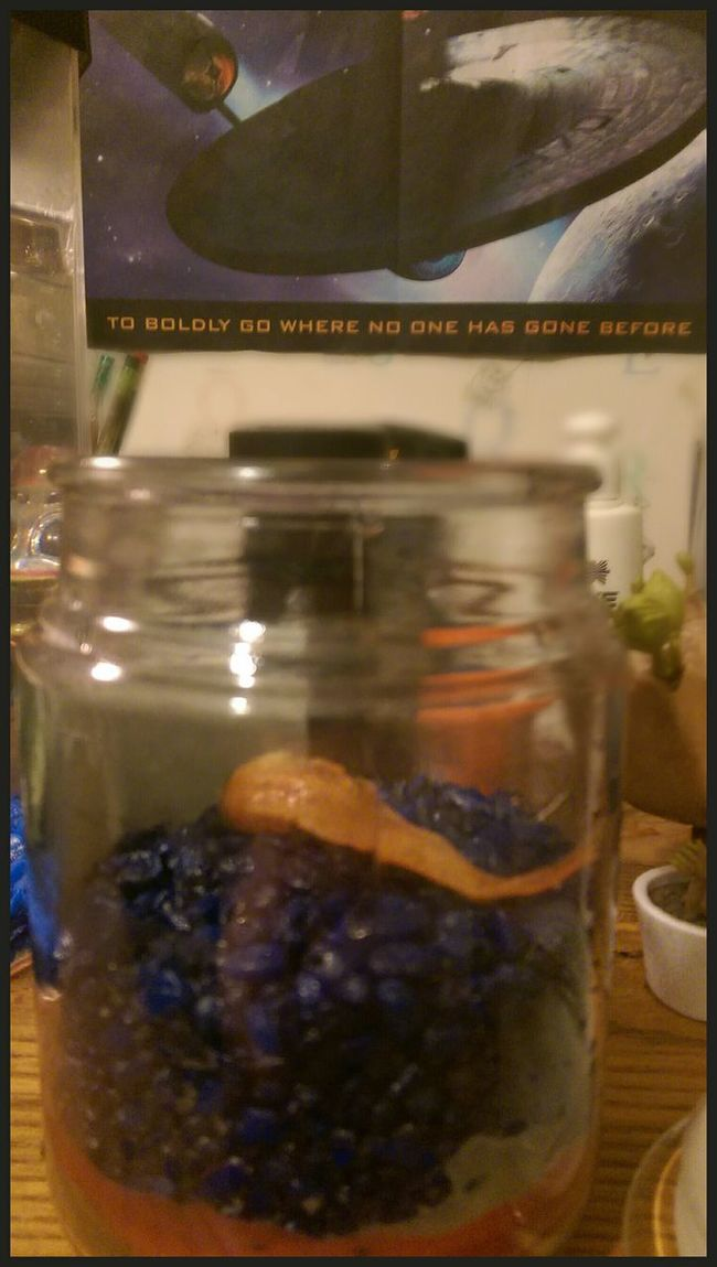 After a wonderful yet long 4 years of great health because of my love for him... I am very sad to say Rest in peace my dear animal Jimmy Sauers. I remember the day I got you from the mason Dixon fair. It will be a long time before I will love any other fish as much as you. Sadness Truefriends RIP :(
