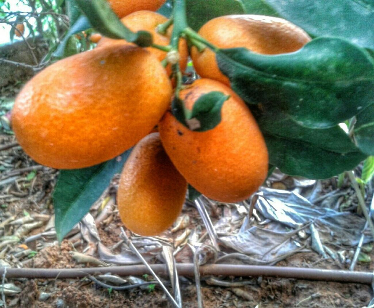 Have A Orange Day! ;-) EE_Daily: Orange Tuesday Simplicity Garden Spring!