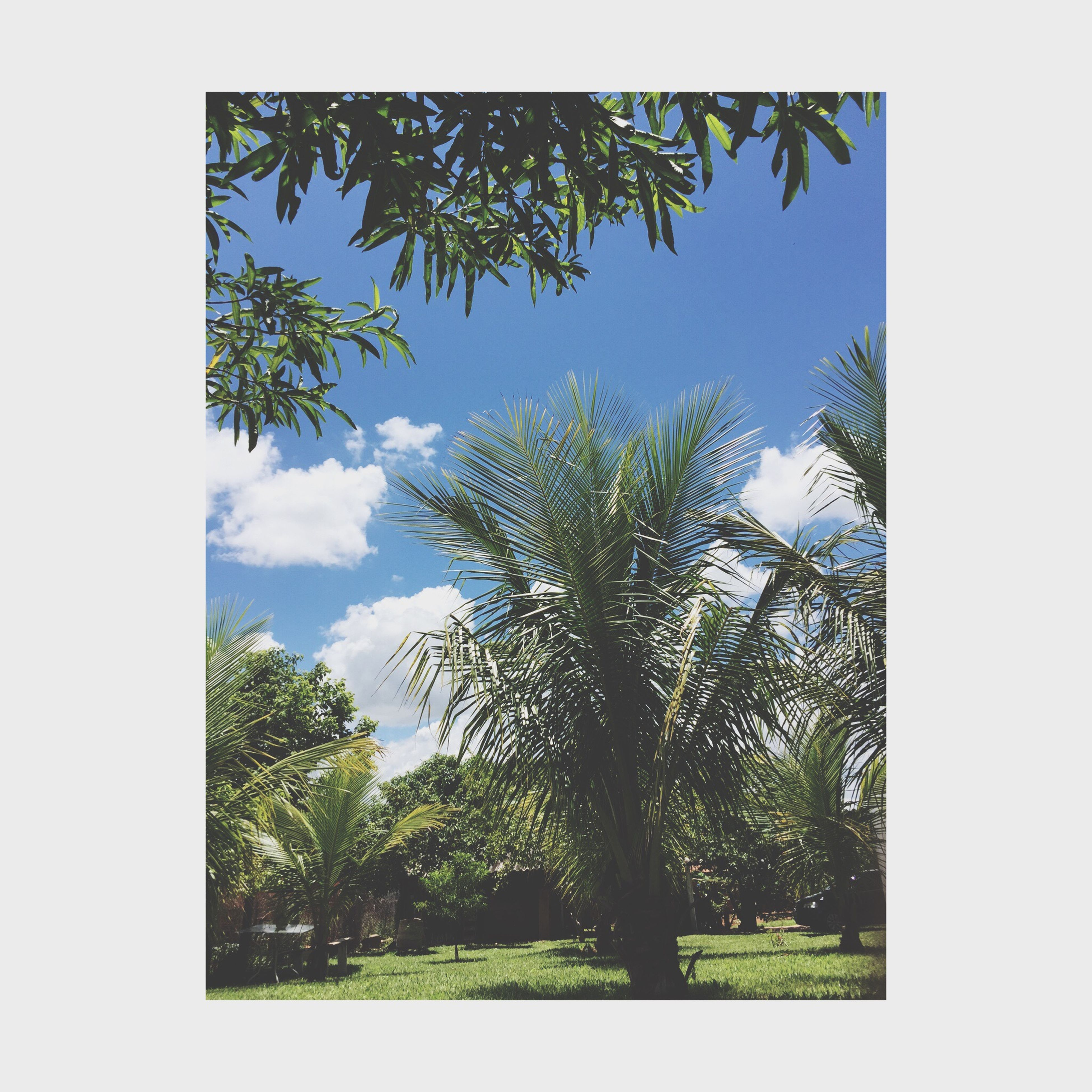 tree, transfer print, sky, auto post production filter, growth, green color, low angle view, tranquility, nature, branch, day, beauty in nature, clear sky, tranquil scene, scenics, lush foliage, no people, outdoors, cloud, green