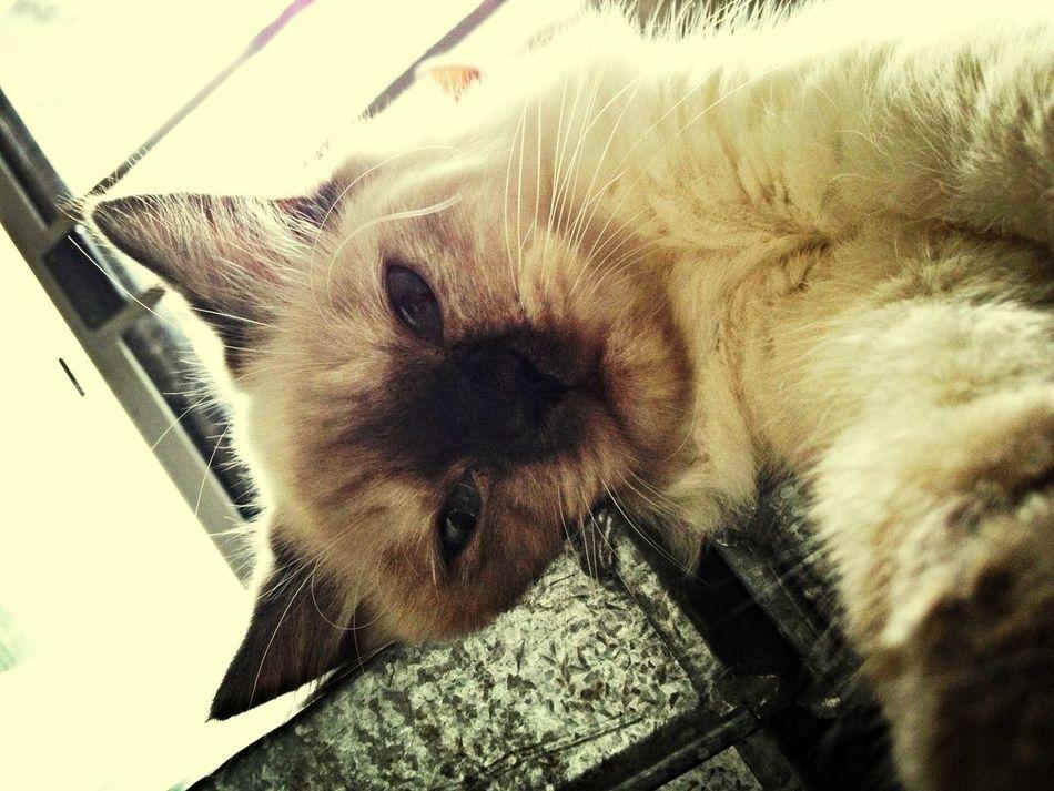 Selfportrait Cat