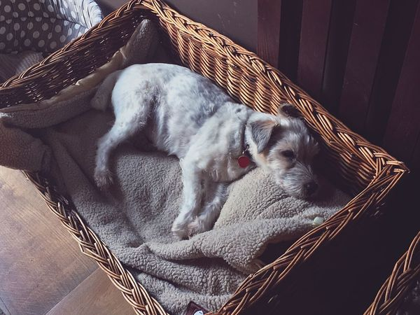 Pet Portraits EyeEm Selects Basket Pets Domestic Animals Animal Themes One Animal Mammal Sleeping Domestic Cat Relaxation Indoors  No People Day Close-up